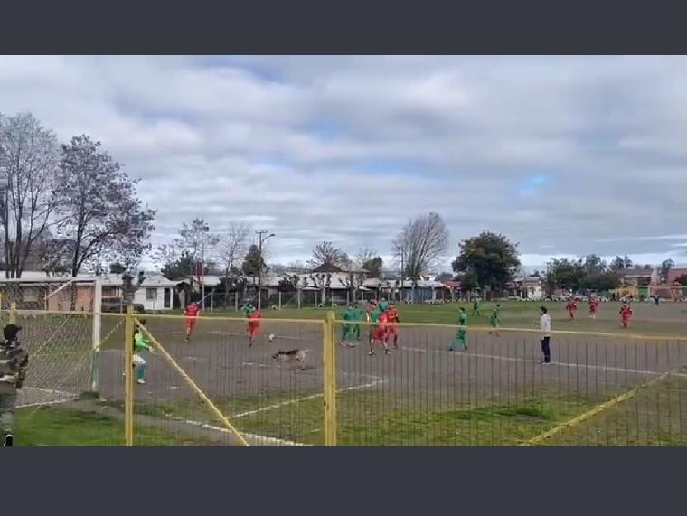 ¡Que golazo!: un perro metió un gol en un partido y el video se hizo viral